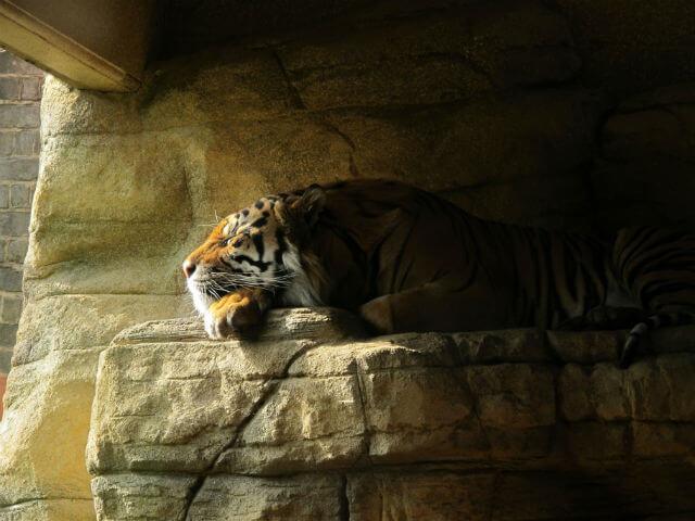 Zoo de Londres