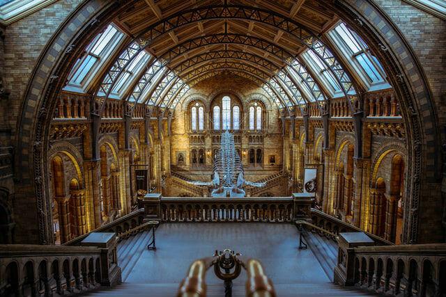 Hall entrée Musée Histoire Naturelle Londres